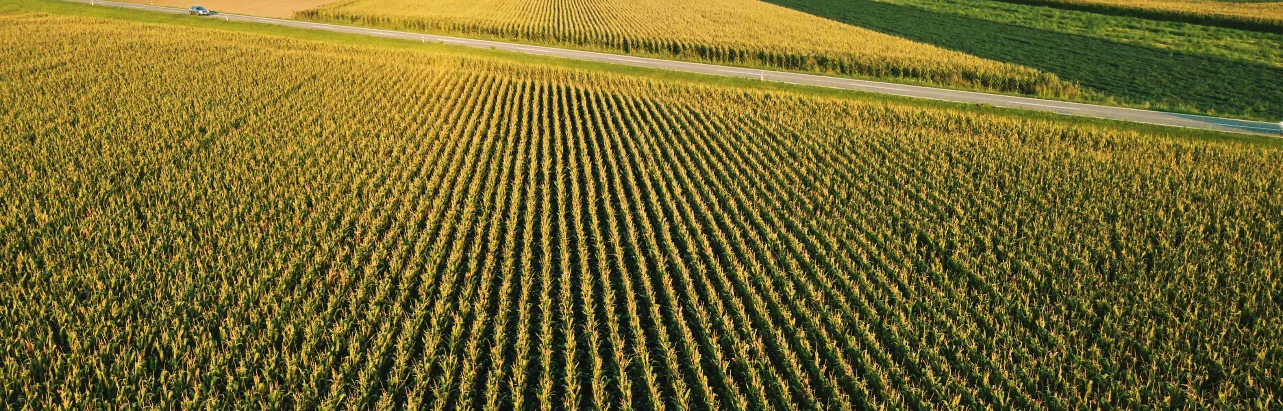 campo mais irrigazione