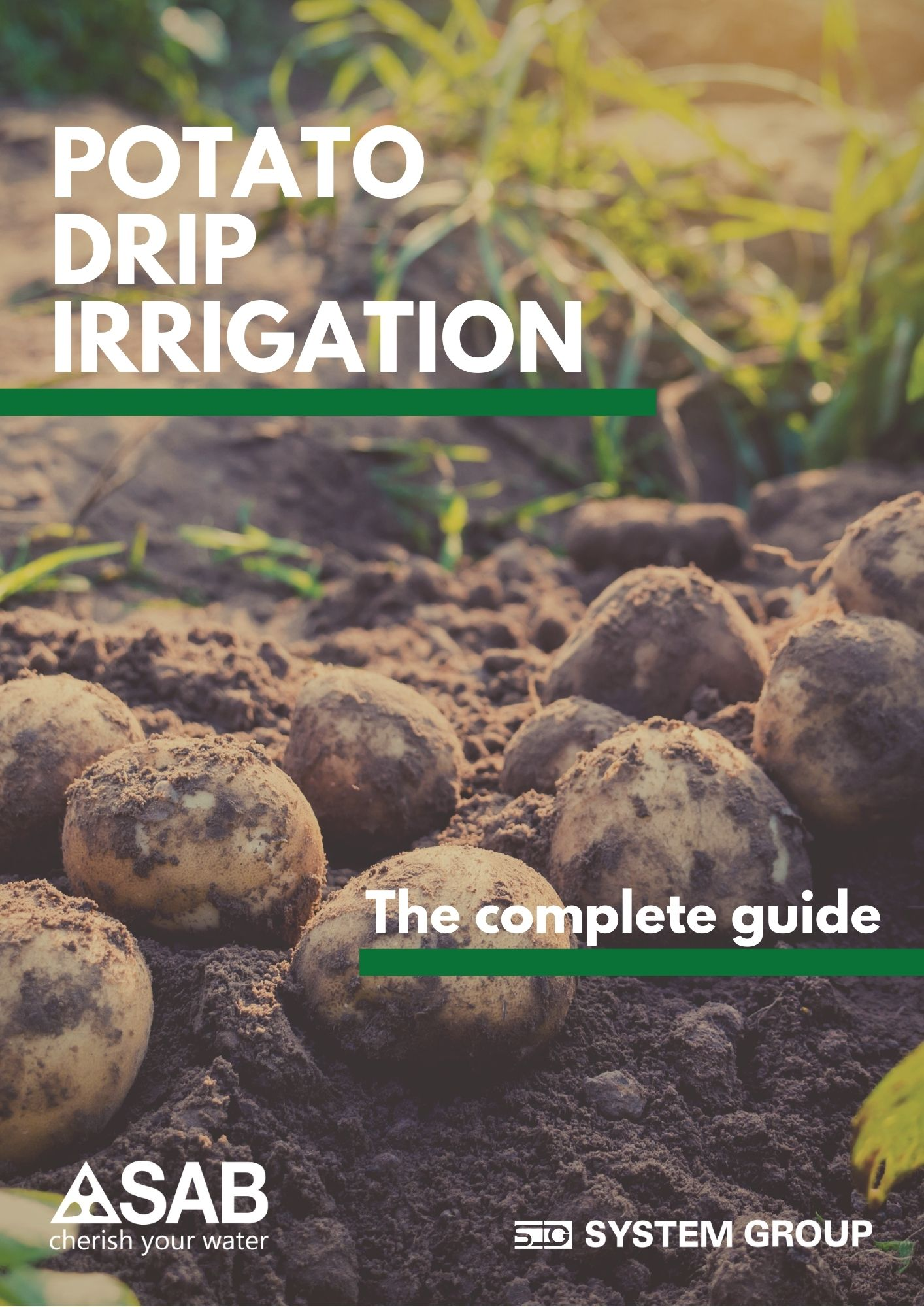 potato drip irrigation